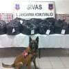 Sivas'ta Esrar ve Kaçak Sigara Operasyonu