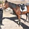 Sivas'ın atlı polisleri göreve başladı