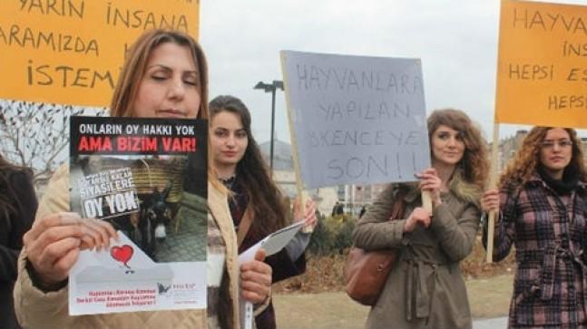 Sivas'ta ki hayvanseverlerden tepki