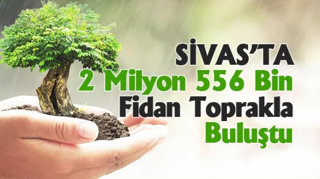Sivas'ta 2 Milyon 556 Bin Fidan Toprakla Buluştu